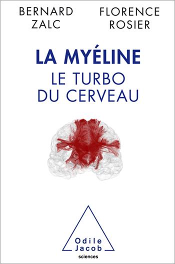 Myéline (La) - Le turbo du cerveau